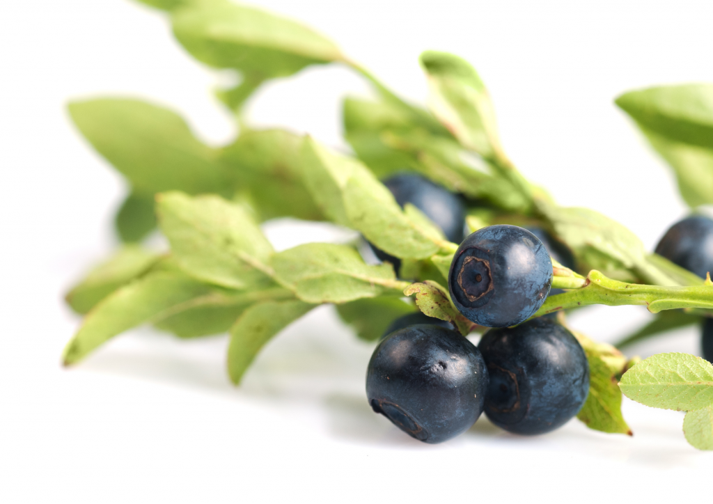 Bilberry-Blueberry-Nordic-nature-trending-skincare-ingredients-inci-natural